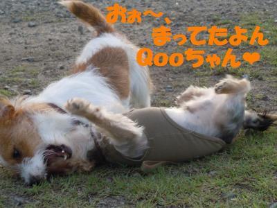 DSCN2063_convert_20110901161307.jpg