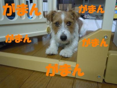 DSCN2140_convert_20110905145455.jpg