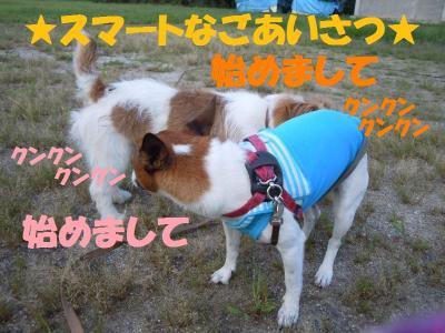 DSCN2323_convert_20110920124057.jpg