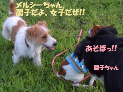 DSCN2334_convert_20110920124505.jpg