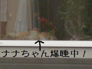 2011_0724_160836-IMG_6091.jpg