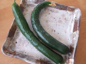 008野菜2