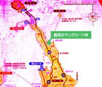 島尻マングローブ林11_ポッパンク