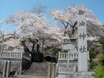 御油神社の桜