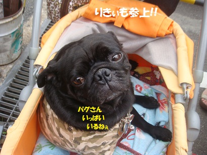 DSC03280_20130217224146.jpg