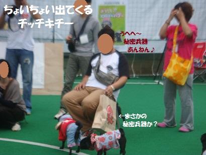 DSC03447_20130218020459.jpg
