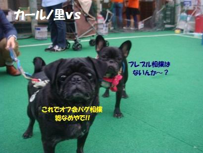 DSC03641_20130216004952.jpg