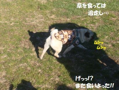 PMBS7853.jpg