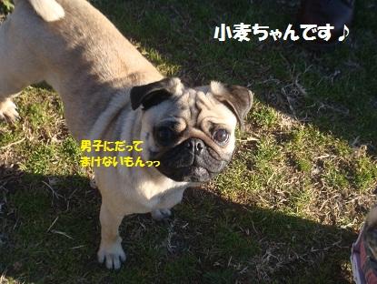 PMBS7896.jpg