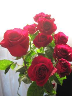 切り花のバラ