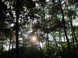 雑木林を散策