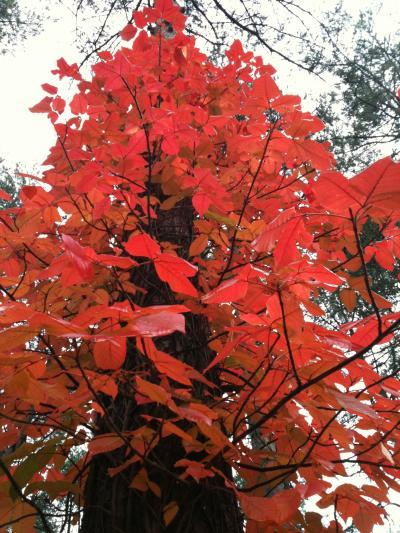 紅葉真っ盛り。