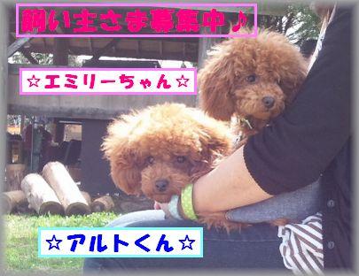 DSC_0451アル&エミ