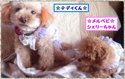2013 0912 シェリーちゃん&テディくん