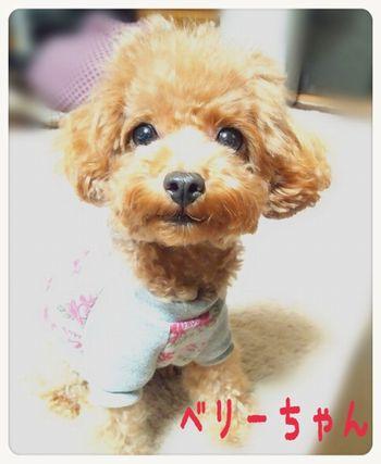 2013 10 23 ベリーちゃん