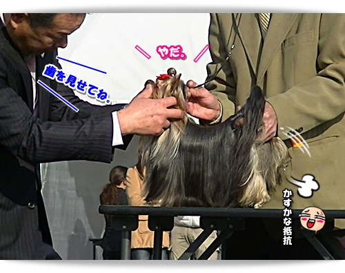 PIC_0412.jpg