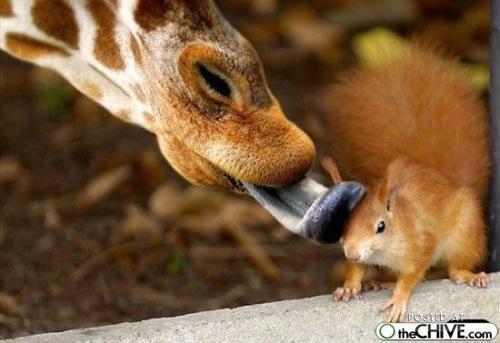 動物116_convert_20110411180342