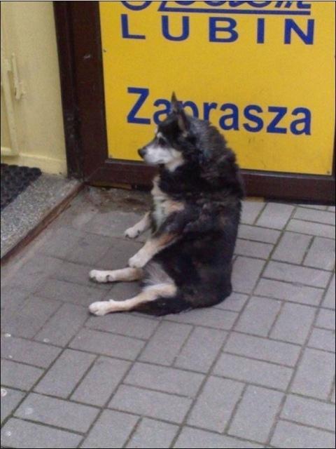 動物139_convert_20110411180531