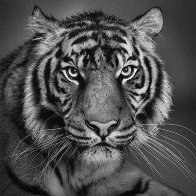 動物170_convert_20110411180932
