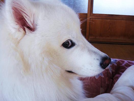 犬の偏差値103