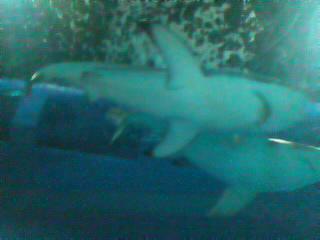 サメ100816_1219~020001