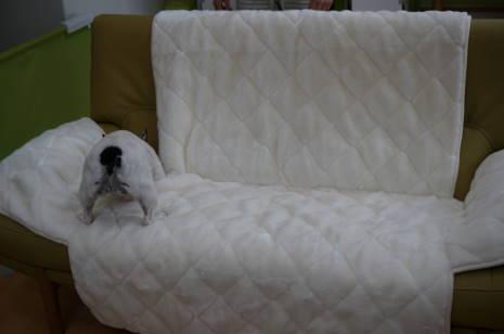 sofa0005.jpg