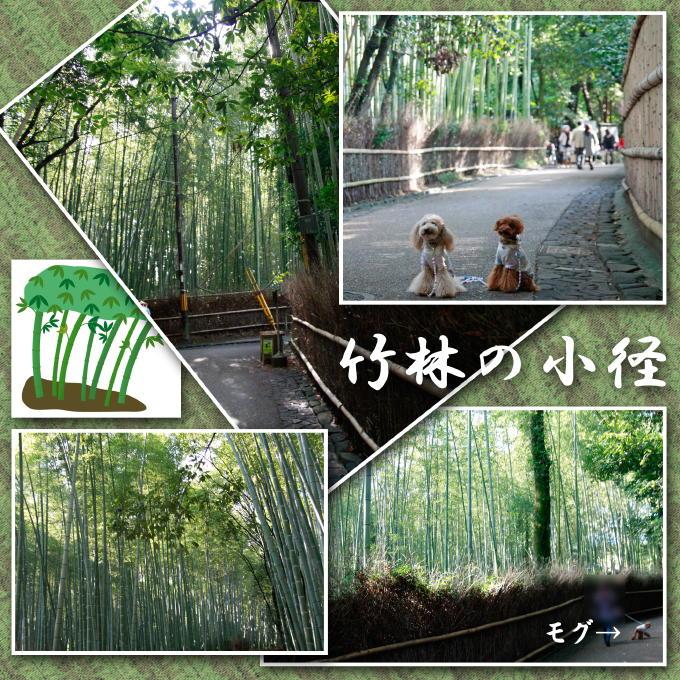 10_20111127162443.jpg