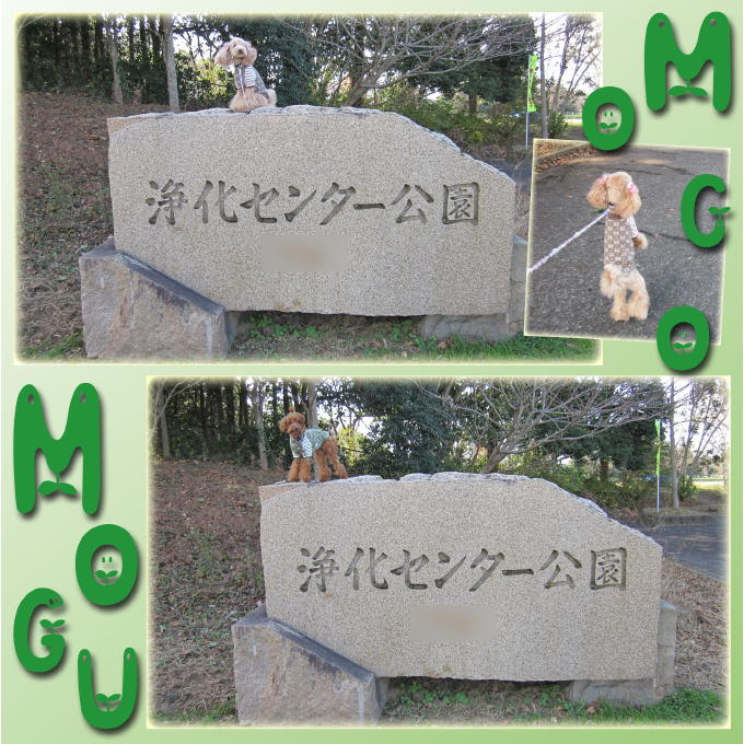 3_20110116161827.jpg