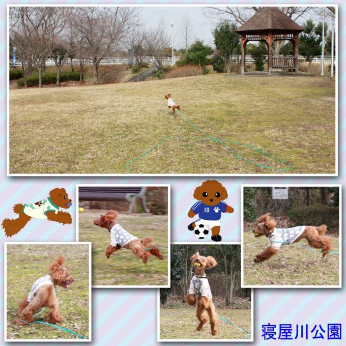 61_20130218203936.jpg