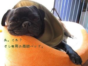 IMG_20110521__01.jpg