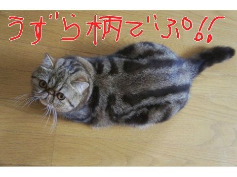 14)うずら柄でぷ