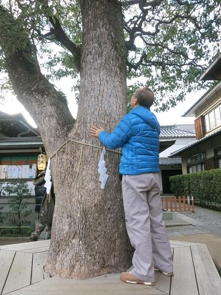 9)楠の御神木樹齢300年以上
