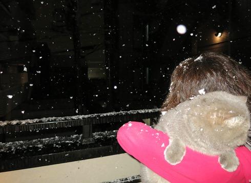 5)雪が積もった~(笑)