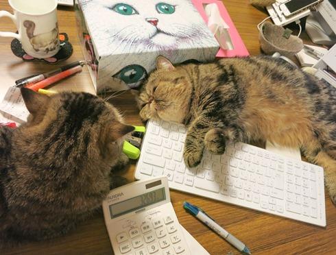 7)そうとう疲れてるでつねー