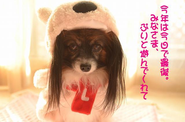 DSC_0001_20111231091114.jpg