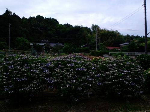 PAP_00141.jpg