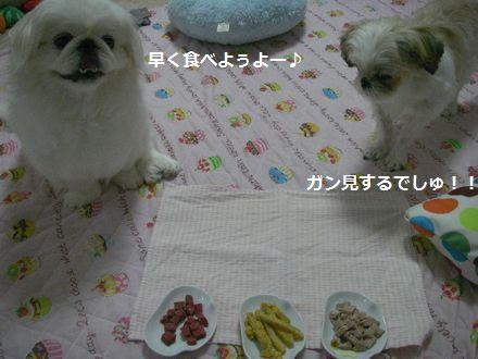 IMGP1137_0.jpg