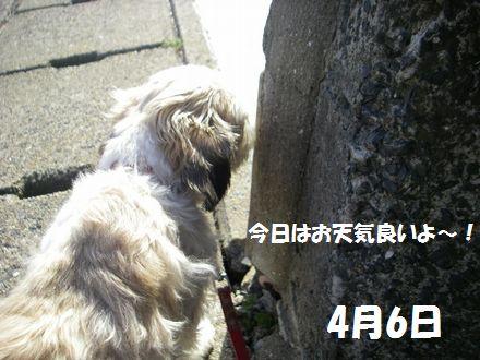 IMGP4055_3.jpg