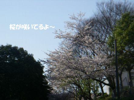 IMGP4061_3.jpg