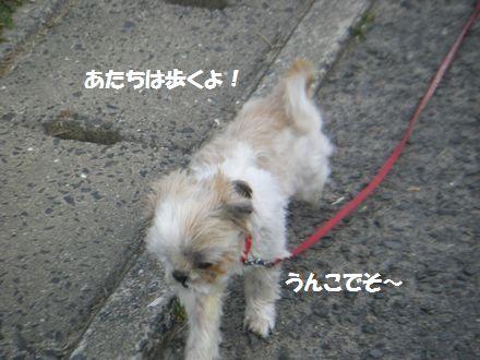 IMGP4069_3.jpg