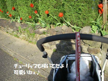 IMGP4091_3.jpg