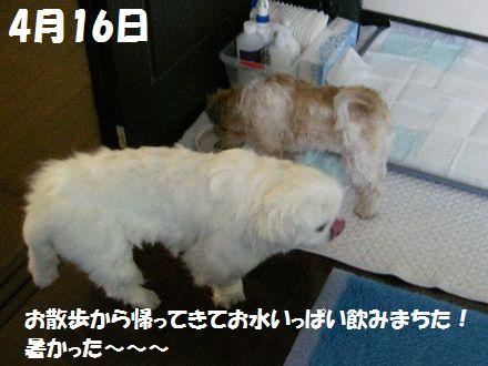 IMGP5077_3.jpg