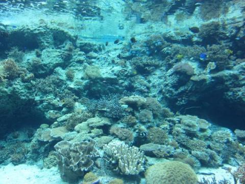 美ら海水族館m14