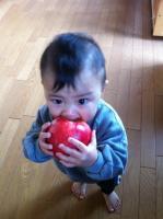 秋神(あきみ)りんご丸かじり