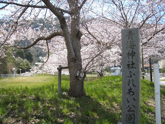 青海神社ふれあい公園の桜
