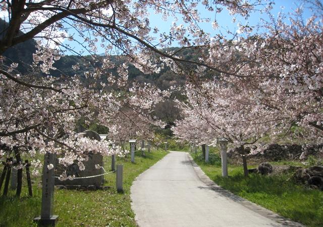 西行法師のみちの桜