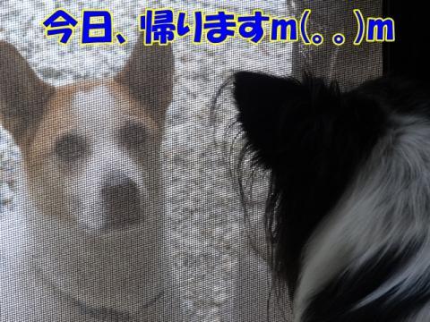 116_20131010142923f45.jpg