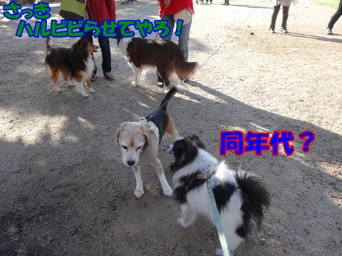 341_20131126193239c92.jpg