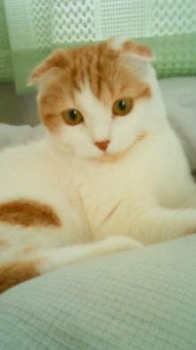 橙鯖 ラフィの日常-猫 7.jpg