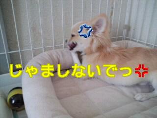 PA0_0022.jpg